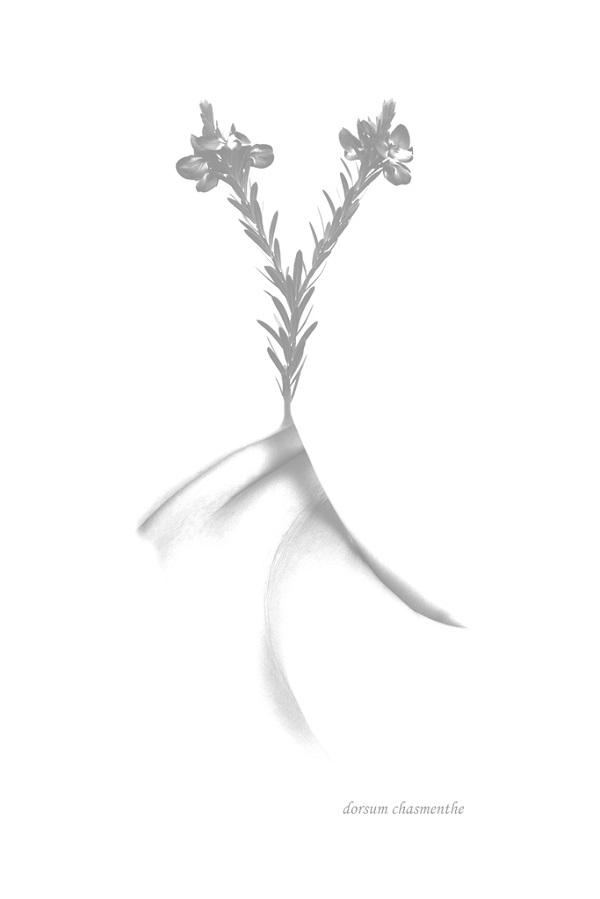 Hortus botanicus Dorsum chasmenthe