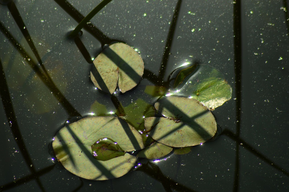Magical water plant. Nourhan Ebrahim