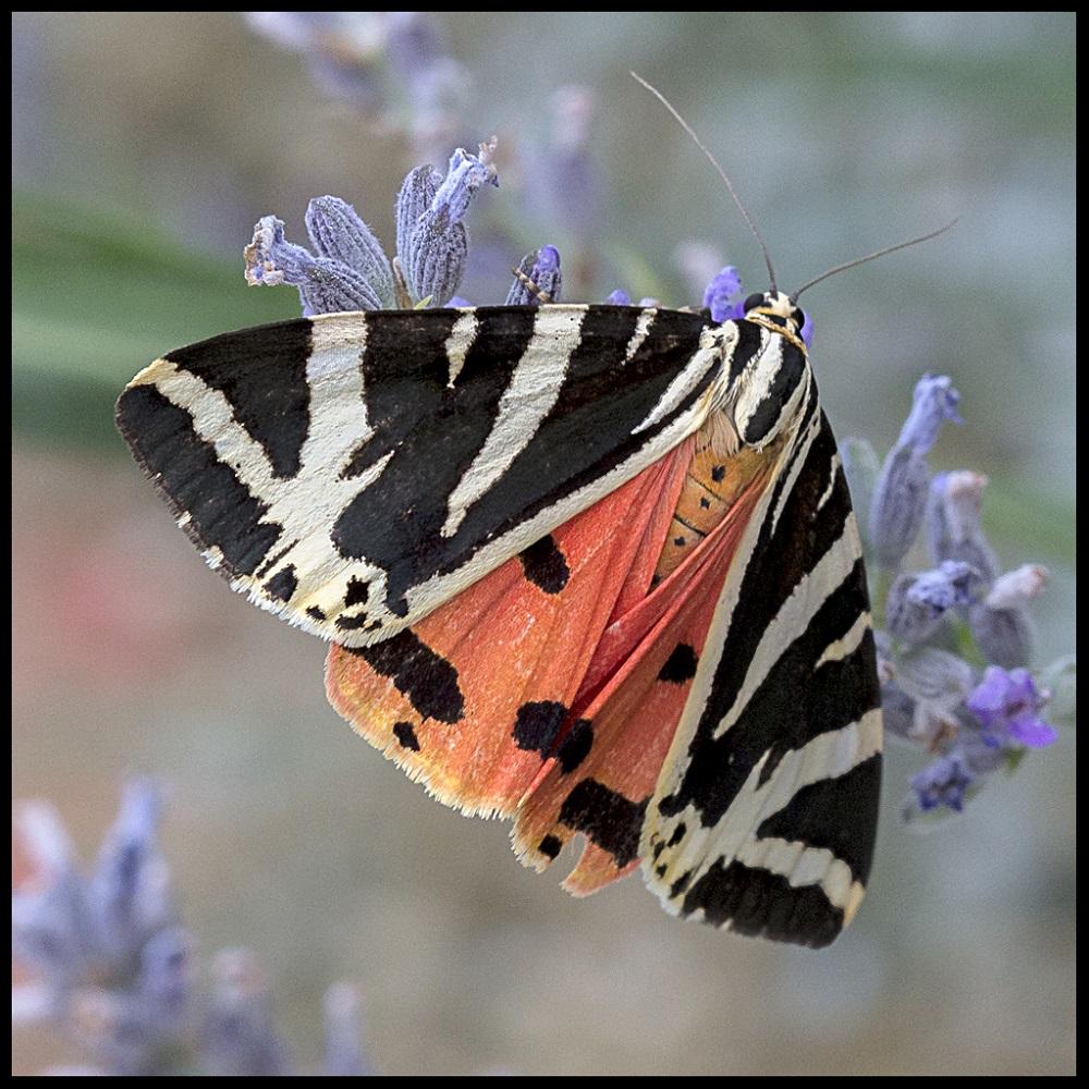 Butterfly. Elena Díaz