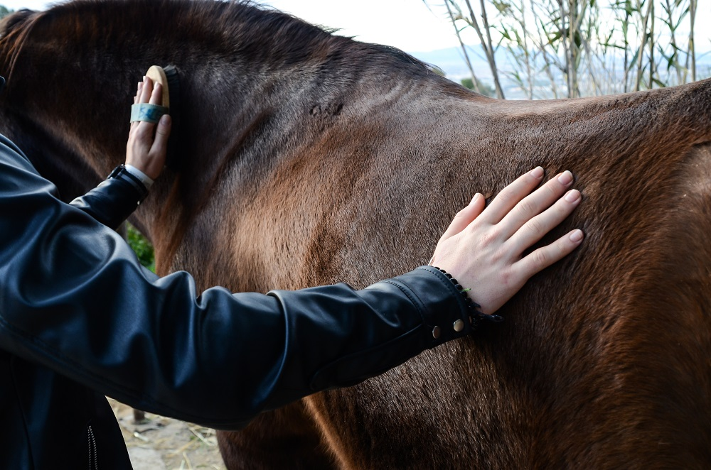 Horse therapy for children who are socially at risk 2