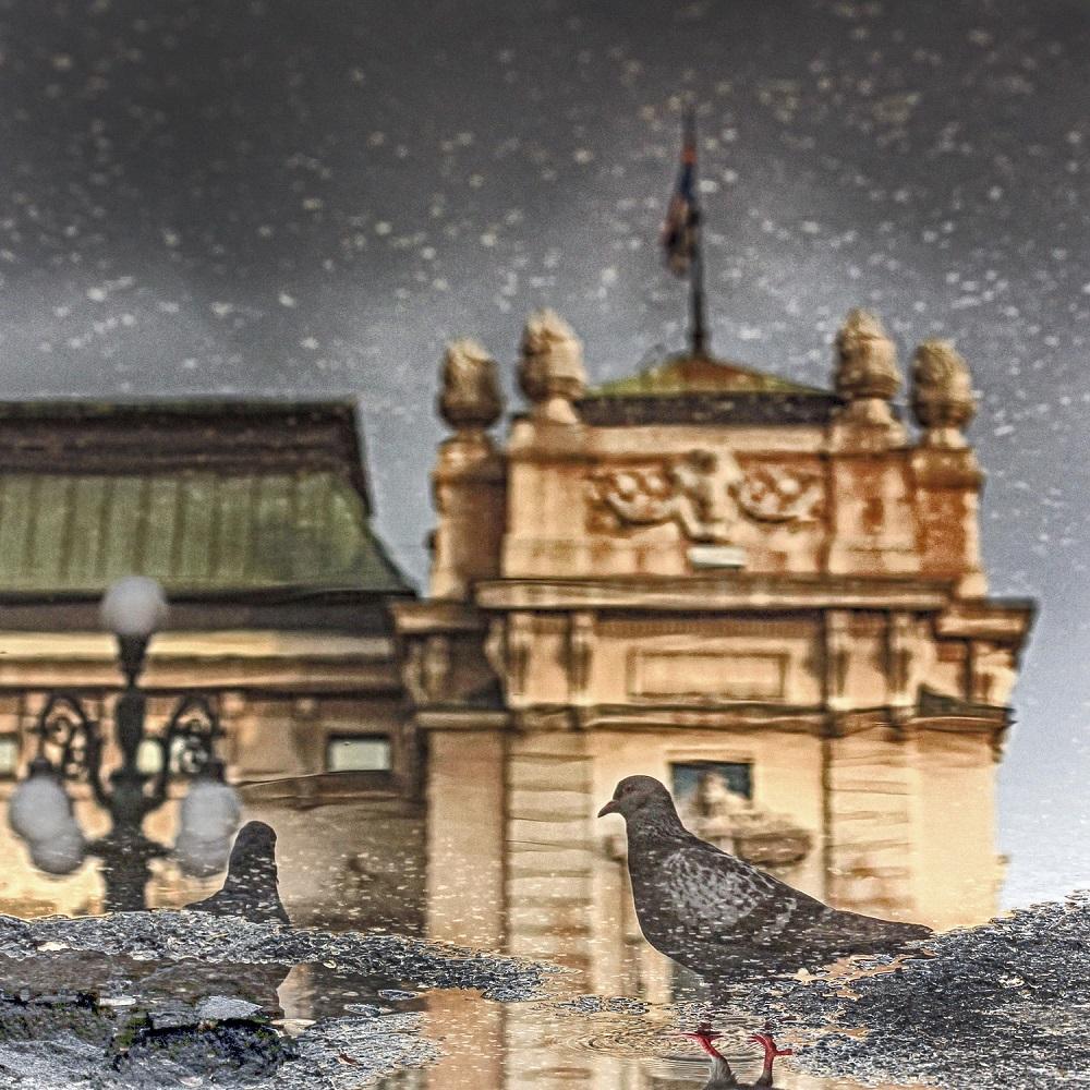 Pigeon-Tijana Lubura